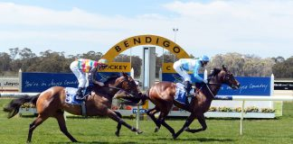 Bendigo quaddie tips