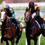 trial horses