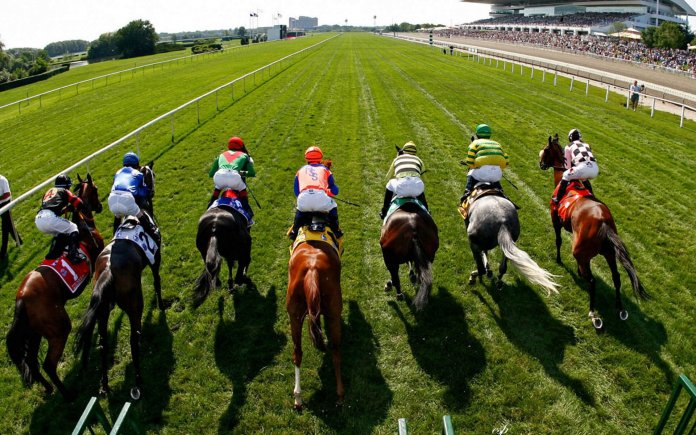 horse racing filters horse filters
