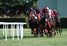 racing tips footy tips AFL tips NRL tips