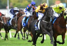 caulfield quaddie tips spring racing