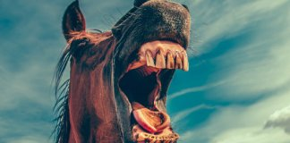 horse betting bias