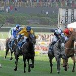 moone valley horses