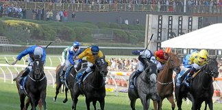 spring racing moonee valley quaddie tips cox plate quaddie tips