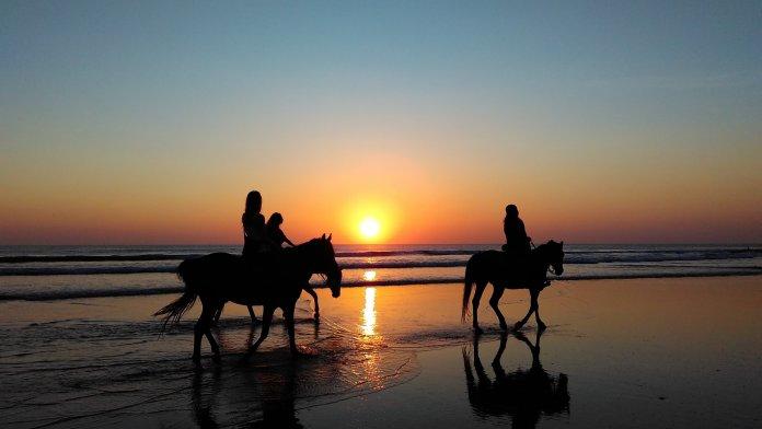 horse freshen up