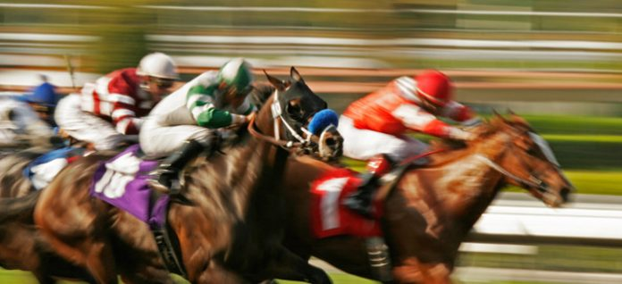 racing tips saver betting model