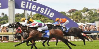 New Zealand racing tips