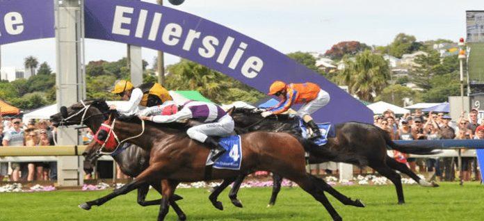 New Zealand racing tips