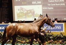 owning horses Nathan Snow Betting 360