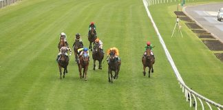 horse racing tips pro-punters tipsters
