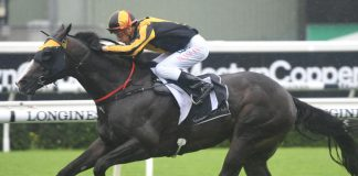Group 1 TJ Smith Stakes preview