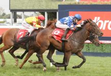 VRC St Leger preview